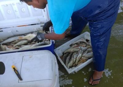 pescaria farol do boi